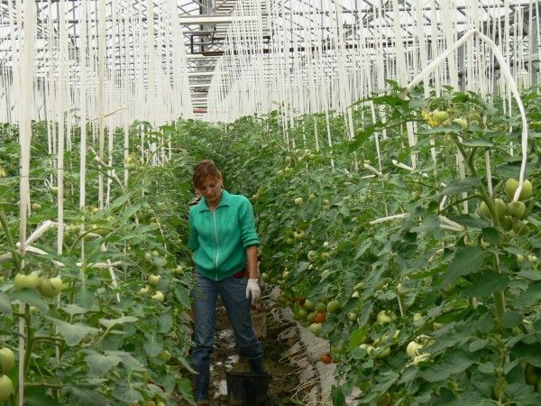 Serele de legume s-au inmultit la Belint