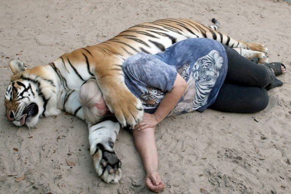 Living-with-Tigers (1)