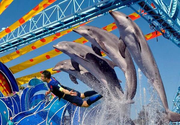 van persie delfini