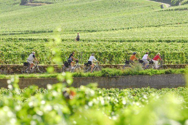 Cycling-Vignoble-Vineyard
