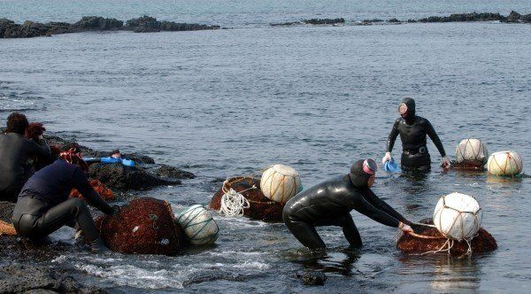Foto: jejutourism.wordpress.com